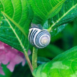 Snail on a Colorful Bush — Stock Photo