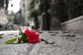 Fallen flower — Stock Photo