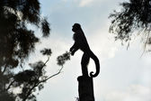 Little monkey silhouette — Stock Photo