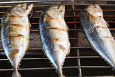 Grilled mackerels — Stock Photo