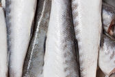 Raw Barracuda Fish Texture — Stock Photo
