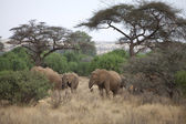 African landscape with elephants — Stock Photo