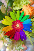Colorful flower — Stock Photo