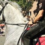 Mounted policeman. — Stock Photo #42442175