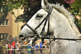 Furious horse. — Stock Photo
