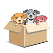 Abandoned Puppies Adoption In Box — Stock Vector