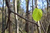Last leaf — Stock Photo