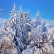 Forest after a heavy snowfall — Stock Photo