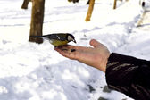 Birds feeding in winter — Stock Photo