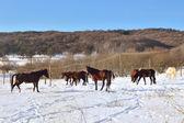 Landscape with horses — Stock Photo
