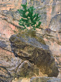 Onely tree growing on a rock — Stock Photo