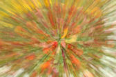 flowers in blur ligh in yellow and red  — Stock Photo