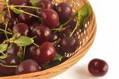 Harvest cherries in basket  — Foto de Stock
