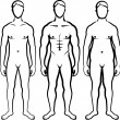 Set of men body types — Stock Photo