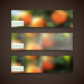 Banners with orange grove — Stock Vector