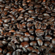Coffee Bean — Stock Photo #32344851