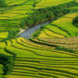 Stock Photo: Terrace rice fields vietnam