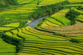 Terrace rice fields vietnam — Stockfoto