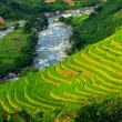 Stock Photo: Terrace rice fields at sapa, North of vietnam