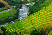 Terrace rice fields at sapa, North of vietnam — Foto de Stock