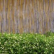 Flower garden in front of Bamboo background — Stock Photo