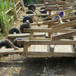 Hill tribe racing 4 wheel wooden cart — Stock Photo