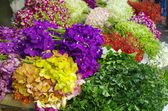 Multicolor orchid Bundle in the flower market, bangkok, Thailand — Stock Photo