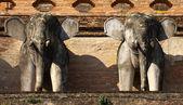 Elephant Stone on Chiang mai temple, Thailand — Stock Photo
