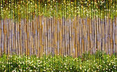 Field of daisy flowers and bamboo frame — Stock Photo