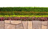 Fondo marco con planta multicolor y aisla la hoja y piedra — Foto de Stock