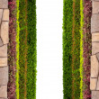 Stock Photo: Frame background with multicolor plant and leaf and stone isolat