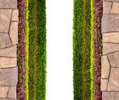 Frame background with multicolor plant and leaf and stone isolat — Stock Photo