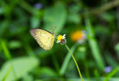 A yellow butterfly on flower in the forest — Stock Photo