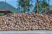 Stack of the coconut beside the street for coconut oil industry — Stock Photo