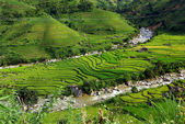 Terrace rice fields, sapa, vietnam — Foto de Stock