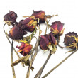 Dried red rose on white background — Stock Photo