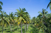 Tropical palms background, Thailand — Stock Photo