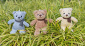 TEDDY BEAR three color with scarf on ornamental plants — Stock Photo