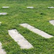 Stock Photo: Pathway on grass