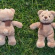 Two TEDDY BEAR brown color with scarf on the grass,front and bac — Stock Photo #42198727