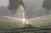 Water sprinkler in tea field on the morning — Stock Photo