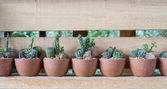 Many Cactus in pot — Stock Photo