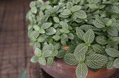Flower leaves in pot for decorate — Foto de Stock