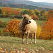 In the pasture in the foothills on autumn — Stock Photo