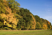 Trees in line in autumn colors — Stock Photo