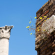 Roman Forum, Rome, Italy — Stock Photo