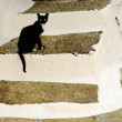 Black cat sitting on the stairs — Stock Photo