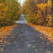 Stock Photo: Autumn lane in the forest