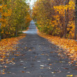 Autumn lane in the forest — Stock Photo