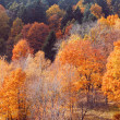 Autumn color trees — Stockfoto